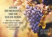 Postkarten: Ich bin der Weinstock, 12 Stück
